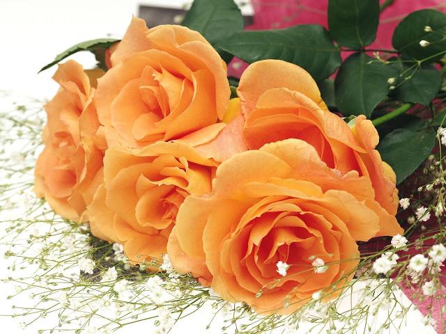 Món quà ý nghĩa ngày 8/3 đẹp tuyệt vời biến tình bạn thành tình yêu